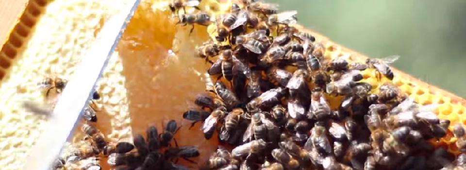abejas-miel